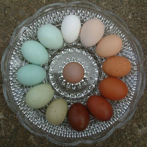 Egg Colors